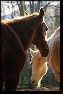 2 horses quilt