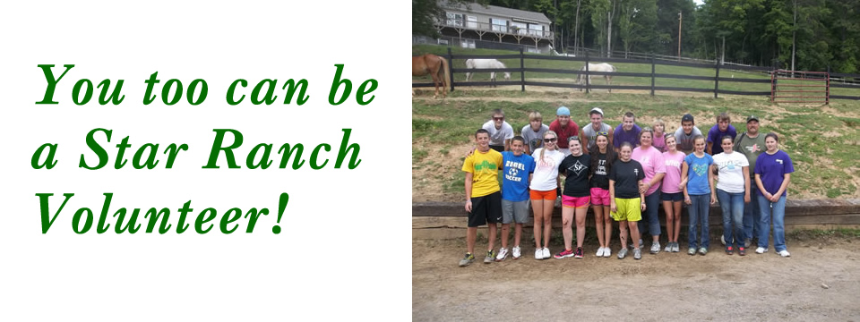 Star Ranch Animal Rescue A Refuge For Abused And Neglected Horses In Haywood County North