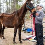aspca rescue horse
